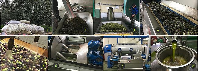 the olive oil process