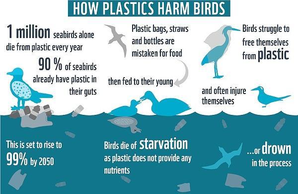 How plastics harm birds